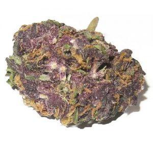 purchase grand daddy purple