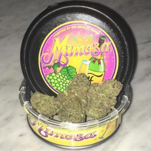 buy-Mimosa-can-online-nightcokesupplies.com